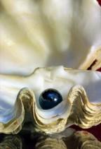 La Perla Nera s.a.s  Antignano